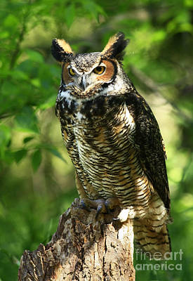 Daybreak's Gentle Caress Majestic Great Horned Owl In The Forest  Art Print