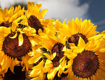 Sunflower Seeds Photograph - Daydreaming Gals by Karen Wiles