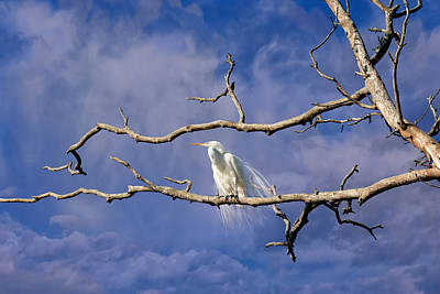 Photograph - Daydreaming Heron by Kathleen Bishop