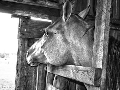 Horse Art Digital Art - Daydreaming IIi by Lesa Fine