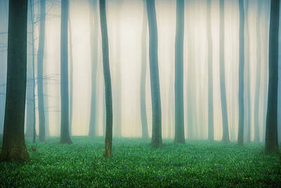 Mist Photograph - Daydreaming Of Bluebells by Adrian Popan