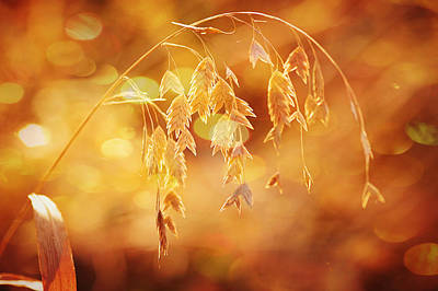 Daydreams In The Meadow Art Print