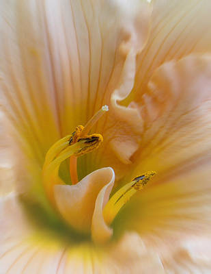 Peach Lilly Photograph - Daylilly Macro by Patti Deters