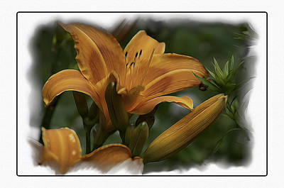 Photograph - Daylily and Beatle by Thomas  Jarvais