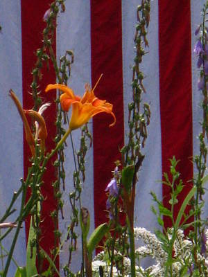 Photograph - Daylily And Old Glory by Bill Tomsa
