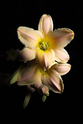 Photograph - Daylily by Anthony Rego