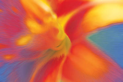 Digital Art - Daylily by David Davies