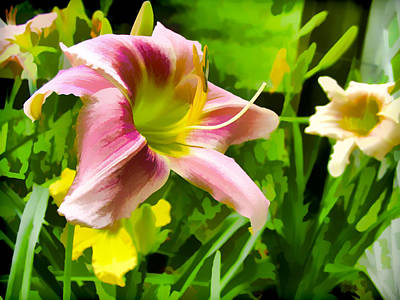 Photograph - Daylily by Harry B Brown