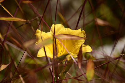 Photograph - Daylily In Autumn by Lori Tambakis