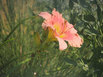 Art Print featuring the photograph Daylily In The Sun by Jayne Wilson