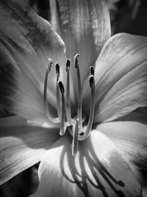 Photograph - Daylily Macro 001 Bw by Lance Vaughn