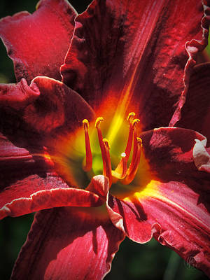 Photograph - Daylily Macro 002 by Lance Vaughn