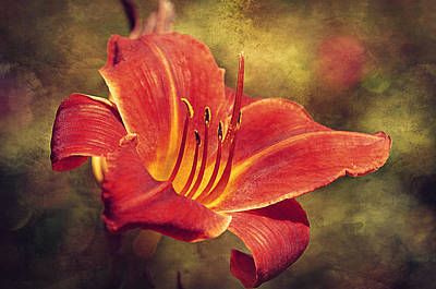 Daylily Art Print by Maria Angelica Maira