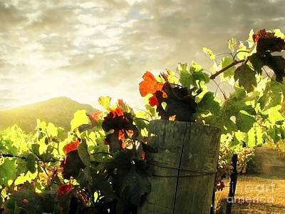 Grape Vines Photograph - Days End In Napa by Ellen Cotton