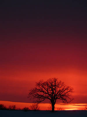 Photograph - Day's End by Theo OConnor