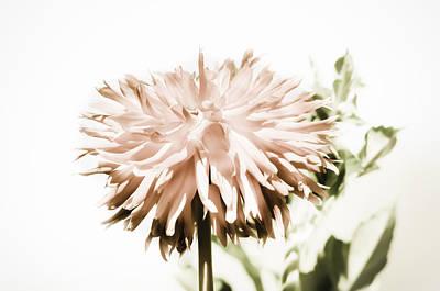 Photograph - Dazzling Dahlia by Sherri Meyer