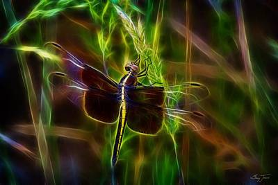 Photograph - Dazzling Dragonfly by Barry Jones