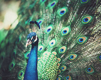 Photograph - Dazzling by Nastasia Cook
