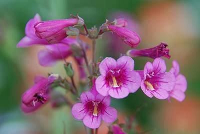 Photograph - Pink Flowers by Tam Ryan