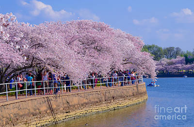 Photograph - Dc Blossom Visitors by Jeff at JSJ Photography