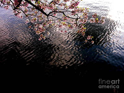 Art Print featuring the photograph Dc Cherry And Black by Jacqueline M Lewis