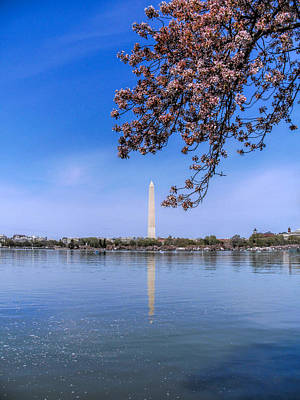 Photograph - Dc Cherry Blossoms by Jemmy Archer