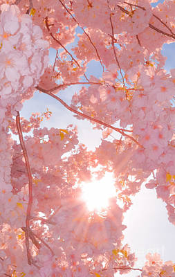 Photograph - Dc Cherry Blossoms Let The Sun Shine Though by Jeff at JSJ Photography