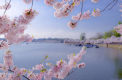 Mixed Media - Dc Cherry Blossoms On Tidal Basin by Jeff at JSJ Photography