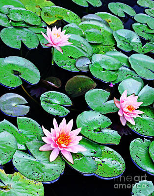 Photograph - Dc Water Lillies 2 by Larry Oskin