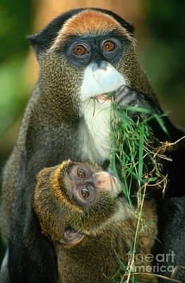 Photograph - De Brazzas Monkey by Terry Whittaker