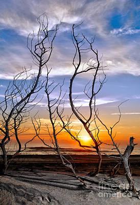 Dead Bush Sunrise I - Outer Banks Art Print by Dan Carmichael