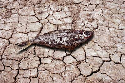 3 Fish Photograph - Dead Fish On Cracked Earth by Victor De Schwanberg