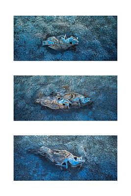 Photograph - Dead Fish Triptych by Alexander Kunz