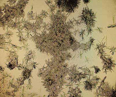 Photograph - Dead Flowers by Hodges Jeffery