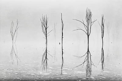 Photograph - Dead Forest Reflections by Eduard Moldoveanu