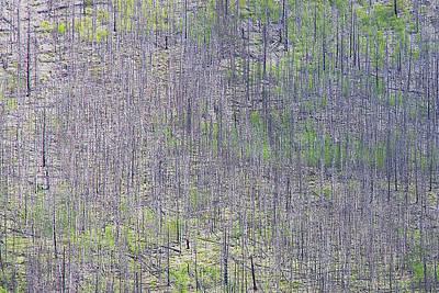 Photograph - Dead Forest  by Stuart Litoff