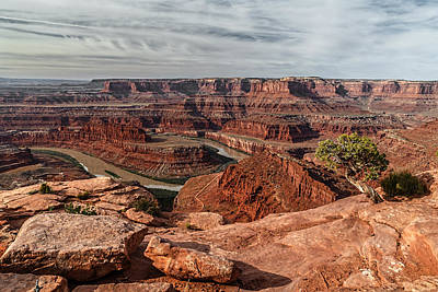Photograph - Dead Horse Point Tree by Wes and Dotty Weber