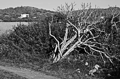Menorca Photograph - Deat Tree In Black And White - Dead Or Alive by Pedro Cardona Llambias