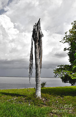 Art Print featuring the photograph Dead Palm by Timothy Lowry