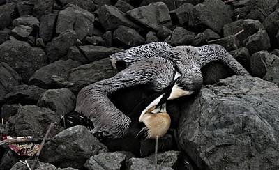 Photograph - Dead Pelican Trash And Creosote Covered Rocks by Elery Oxford