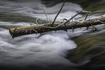 Photograph - Dead Pine Tree Trunk Stuck In The Rapids by Randall Nyhof