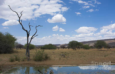 Dead Tree & Water Hole, Okonjima Bush Art Print