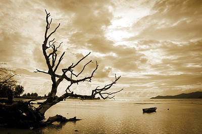 Photograph - Dead Tree And Sea by Alexey Stiop