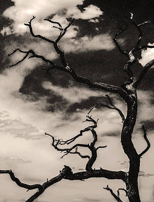 Photograph - Dead Tree by Arkady Kunysz