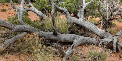 Photograph - Dead Tree In Arches ... Utah by Rob Huntley
