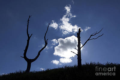 Dead Tree In Backlighting Art Print by Bernard Jaubert