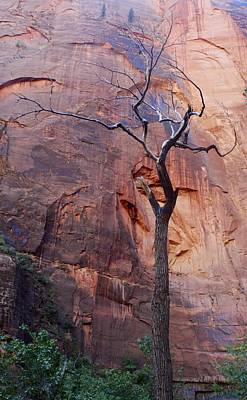 Photograph - Dead Tree In Zion by Stuart Litoff