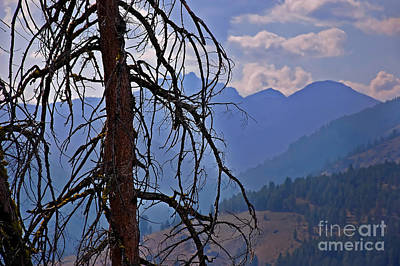 Dead Tree Mountains Landscape Art Print by Valerie Garner