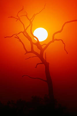 Dead Tree Silhouette And Glowing Sun Art Print by Johan Swanepoel