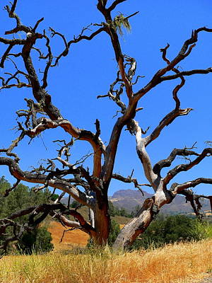 Photograph - Dead Tree Standing Strong by Jeff Lowe